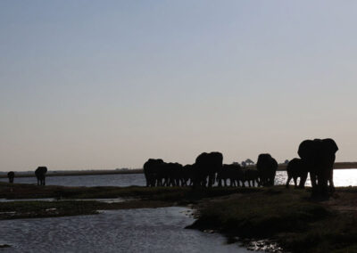 Elephant Chobe4x4 Self Drive Botswana Adventure