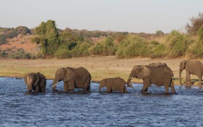 Self Drive through Botswana