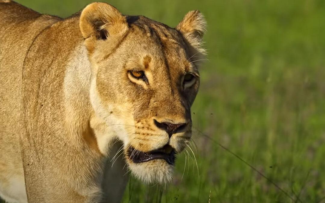 Self Drive Safari Botswana Chobe 4x4