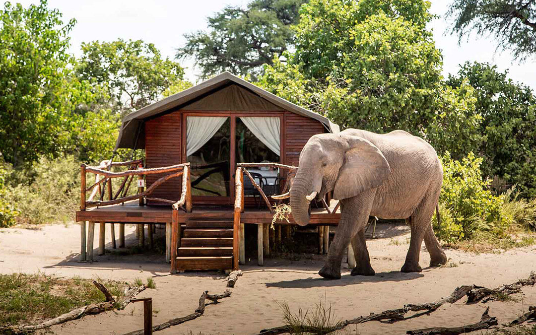 Camping Botswana Camp Savuti
