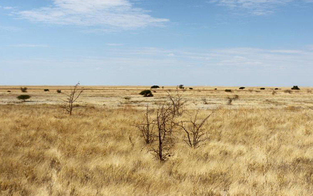 Camping Botswana Njuca
