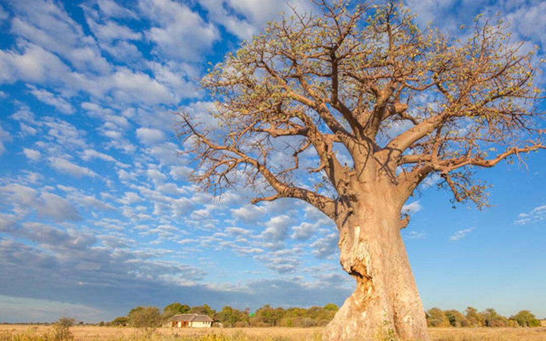 Camping Botswana Nxai Pan