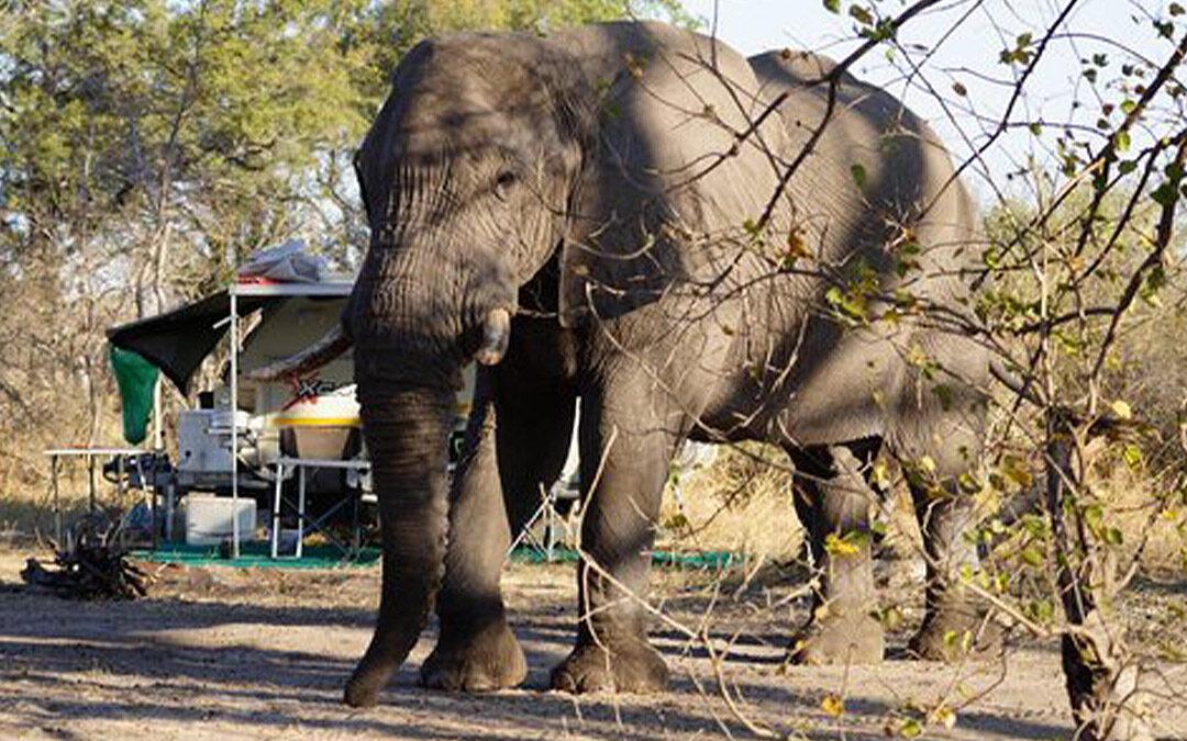 Camping Botswana Xakanaxa