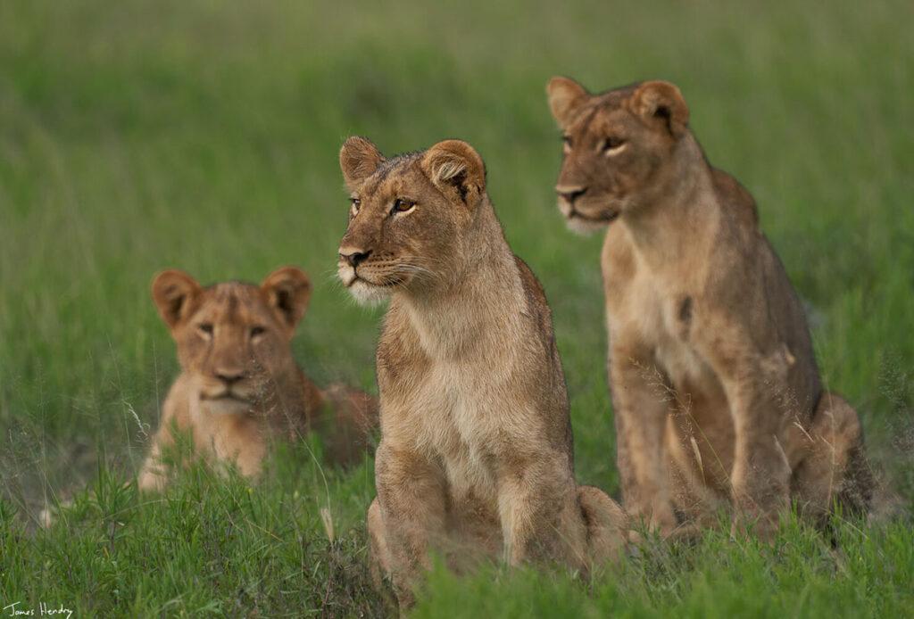 Self Drive Safari Botswana