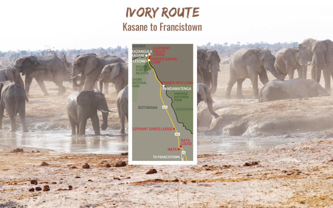 Ivory Route